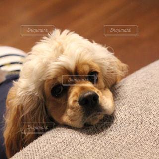 犬の写真・画像素材[133660]