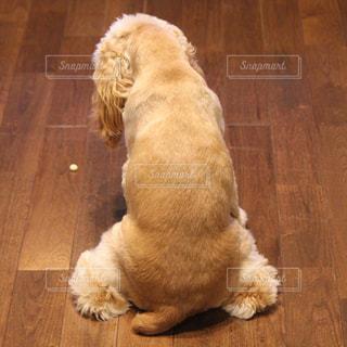 犬の写真・画像素材[133664]