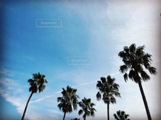 palm treeの写真・画像素材[899514]