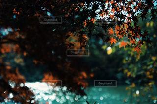 紅葉と水面の写真・画像素材[900212]