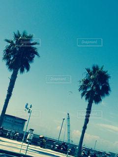 晴れた日にヤシの木のグループの写真・画像素材[900409]