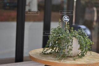 テーブルの上の植物の写真・画像素材[910691]