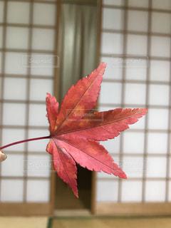 紅葉の写真・画像素材[899830]