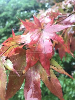 近くに木の枝にピンク色の花のアップの写真・画像素材[899831]
