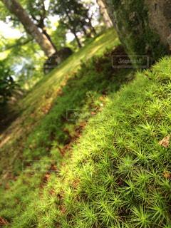 苔むす庭園の写真・画像素材[900226]