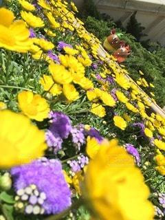 花の写真・画像素材[28580]