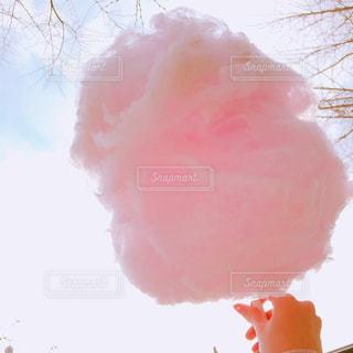 ピンクの写真・画像素材[909398]