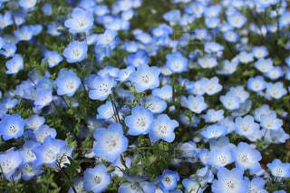 お花畑の写真・画像素材[909596]