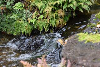 川の側の木と滝の写真・画像素材[900234]