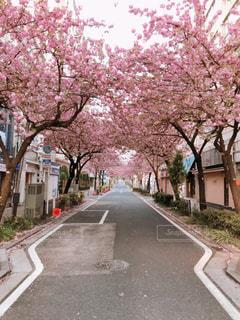 桜並木の写真・画像素材[1114507]