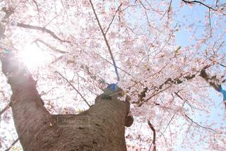 近くの木のアップの写真・画像素材[1114509]
