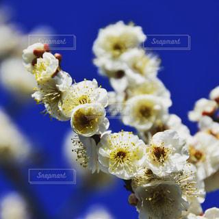近くの花のアップの写真・画像素材[1007463]