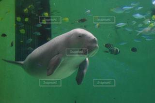 人魚の写真・画像素材[901002]