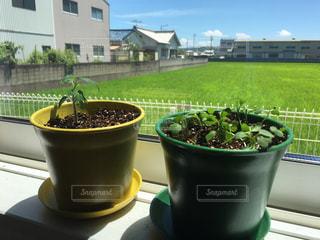 緑の草のカップの写真・画像素材[901102]