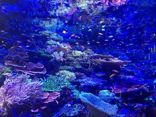 サンゴの水中ビューの写真・画像素材[901116]