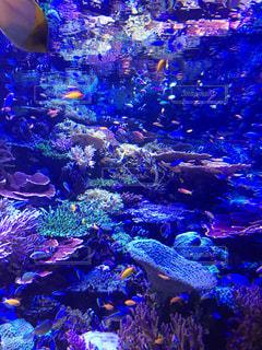 サンゴの水中ビューの写真・画像素材[901119]