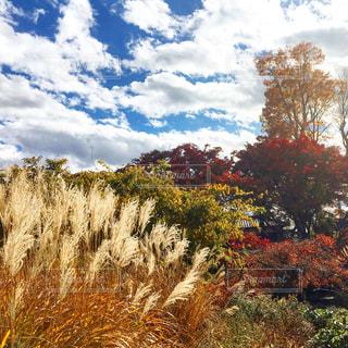 秋の庭 - No.901628