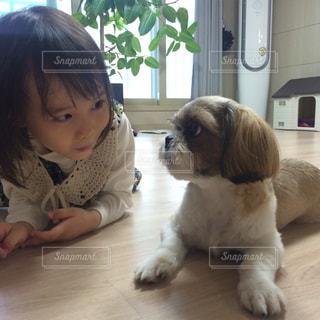 犬と見つめ合う女の子の写真・画像素材[902441]