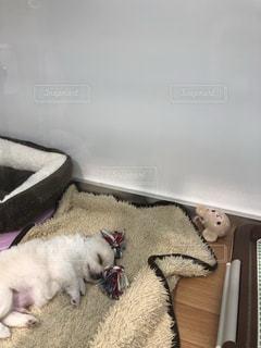 眠る犬の写真・画像素材[911052]