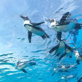 プールの水でカモメの群れの写真・画像素材[903008]
