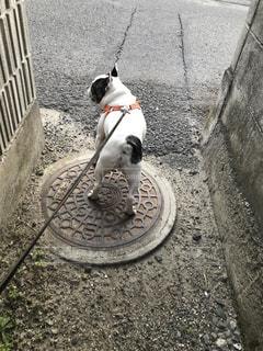 未舗装の道路の上を行く犬の写真・画像素材[934761]