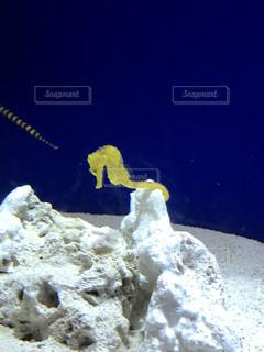 水面下を泳ぐ魚たちの写真・画像素材[903294]