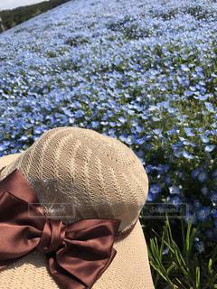 ネモフィラと帽子の写真・画像素材[1034991]