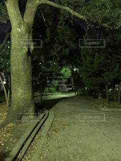 夜の公園の写真・画像素材[905688]