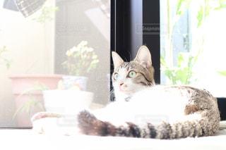 窓の前で横になっている猫の写真・画像素材[913197]
