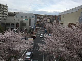 満開の桜の写真・画像素材[911620]