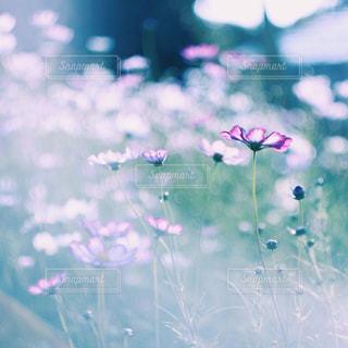 近くの花のアップ - No.905407