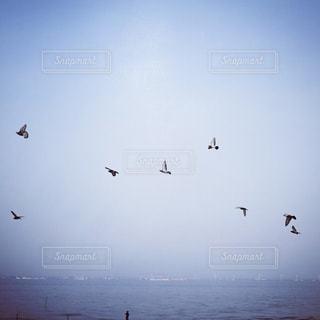 水の体の上を飛んでカモメの群れの写真・画像素材[905413]