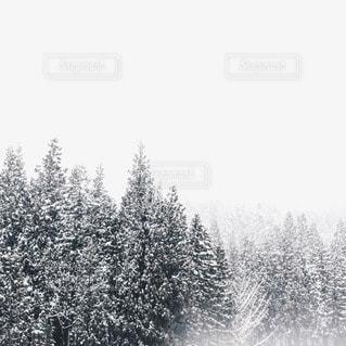 冬の写真・画像素材[28681]