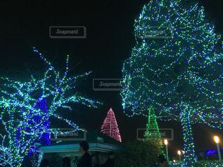 よみうりランドのイルミネーションの写真・画像素材[904657]