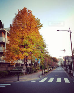 秋を感じてパシャリの写真・画像素材[905104]