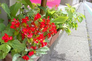 庭の植物の写真・画像素材[905112]