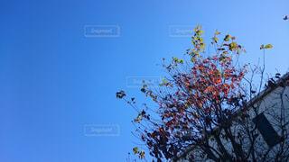 秋の空の写真・画像素材[910774]