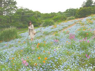 花とお散歩の写真・画像素材[910783]