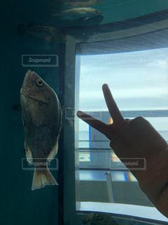 寝る魚の写真・画像素材[905028]