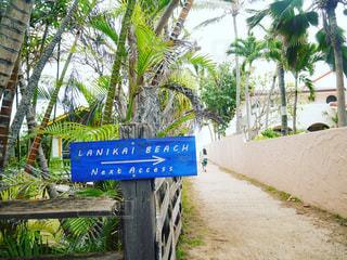ラニカイビーチへ続く小道inHawaiiの写真・画像素材[1209141]