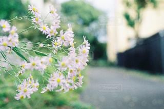 道端に咲いている花 - No.905140