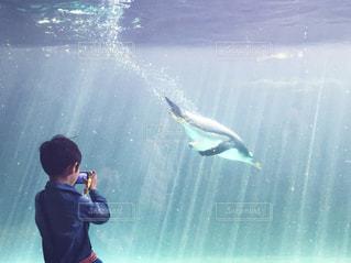 小さなカメラマン ペンギンの写真・画像素材[905399]