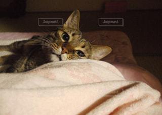早く寝ようよの写真・画像素材[905372]