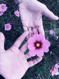 花を持っている手 - No.906522