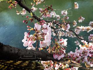 花の写真・画像素材[417645]