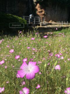 自然の写真・画像素材[520538]