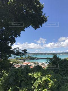 海を見守る木のシーサーの写真・画像素材[905774]