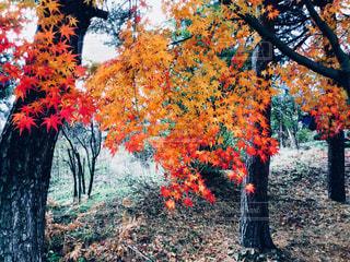 フォレスト内のツリーの写真・画像素材[924506]