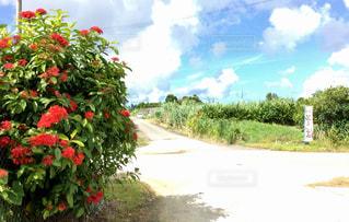 沖縄の写真・画像素材[924537]