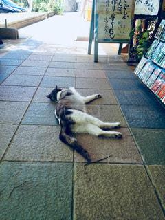 歩道の上に横たわる犬の写真・画像素材[924580]